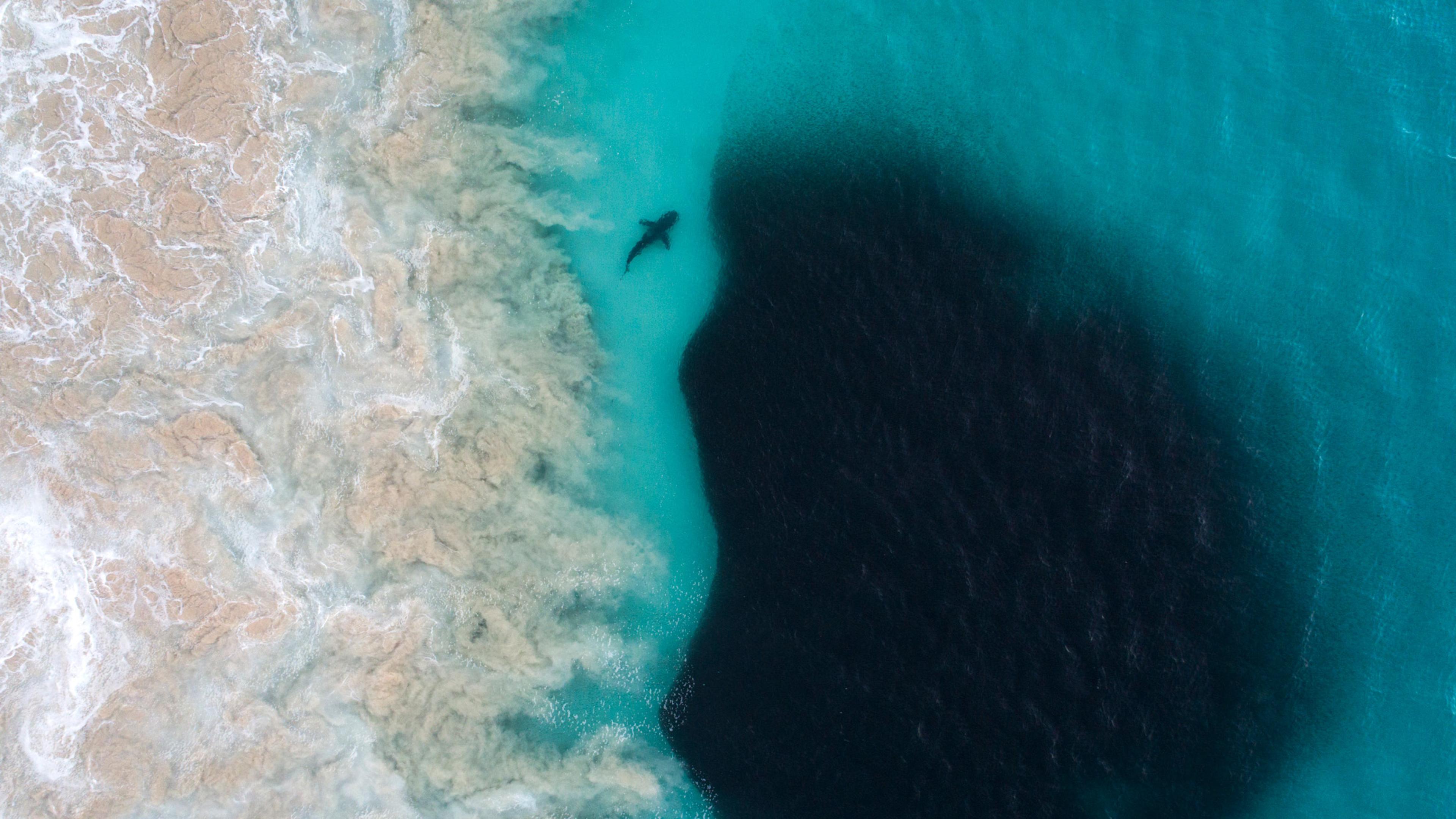 3840x2160 Aerial View Of Shark Inside Deep Sea 4k Wallpaper