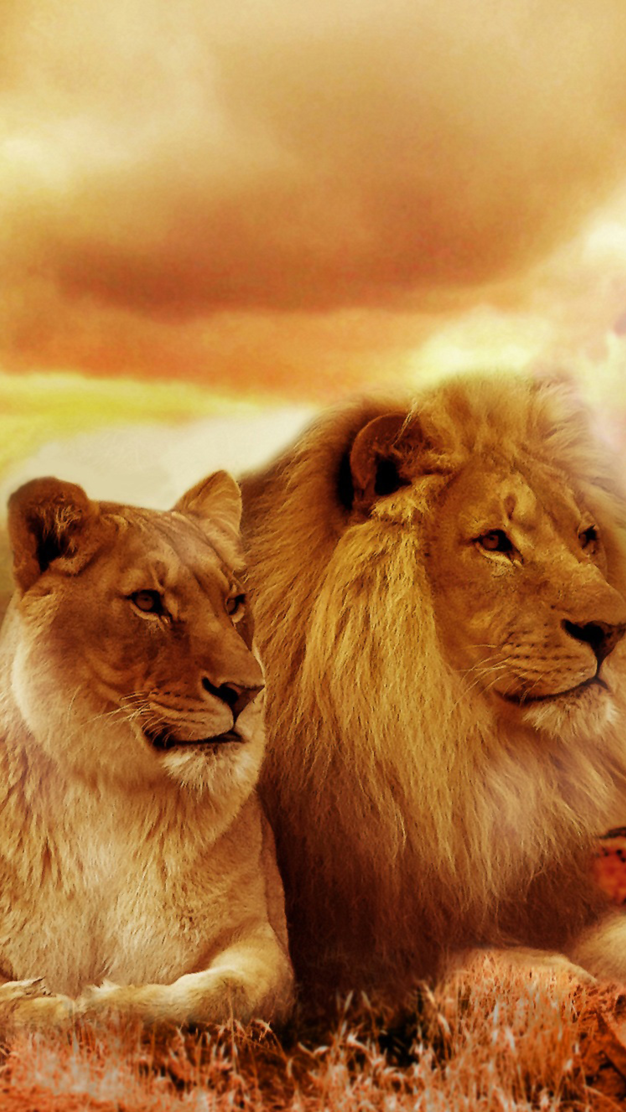African Lion And Lioness, Full HD Wallpaper