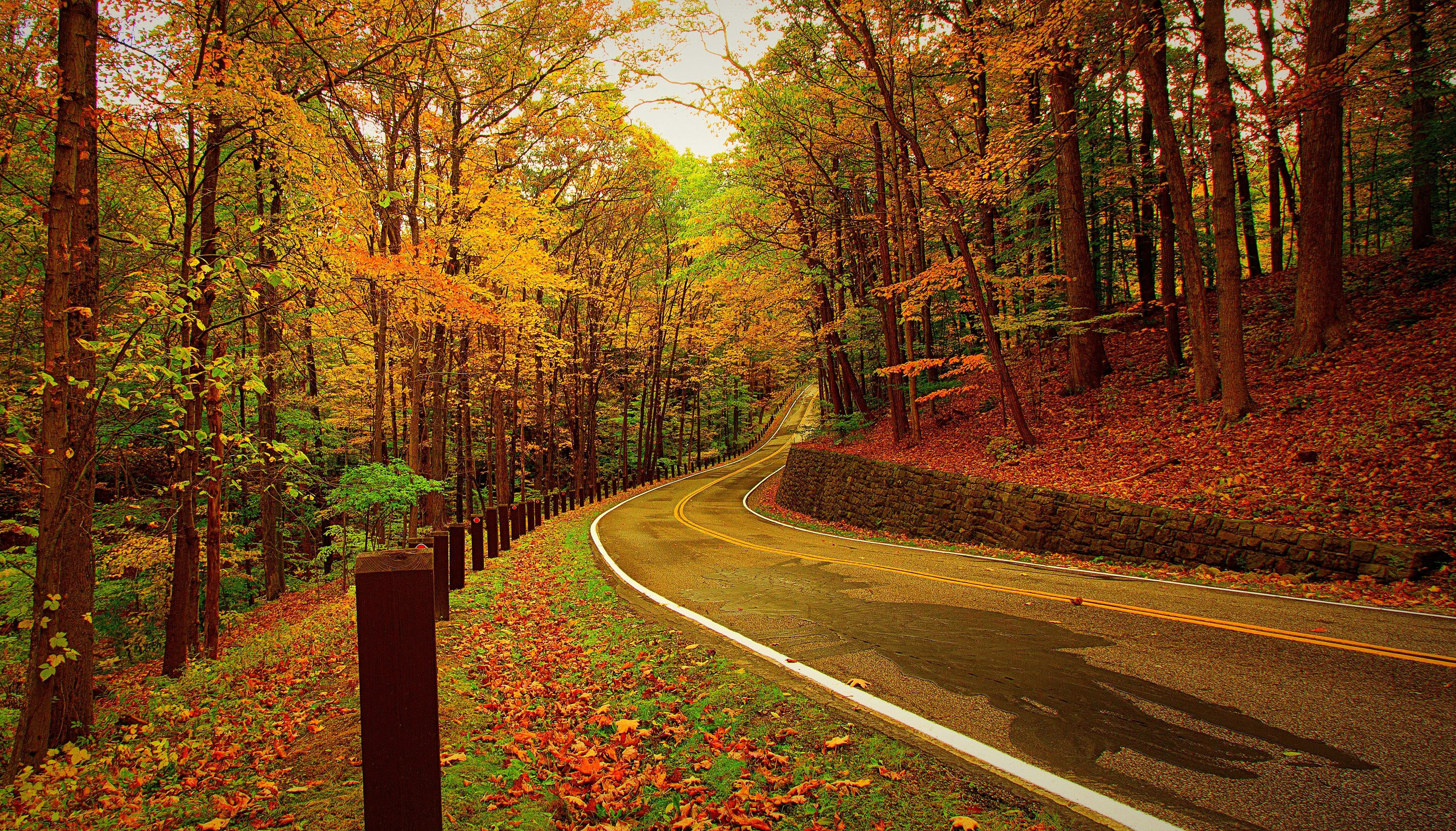 Autumn Forest Road Wallpaper Hd Nature 4k Wallpapers