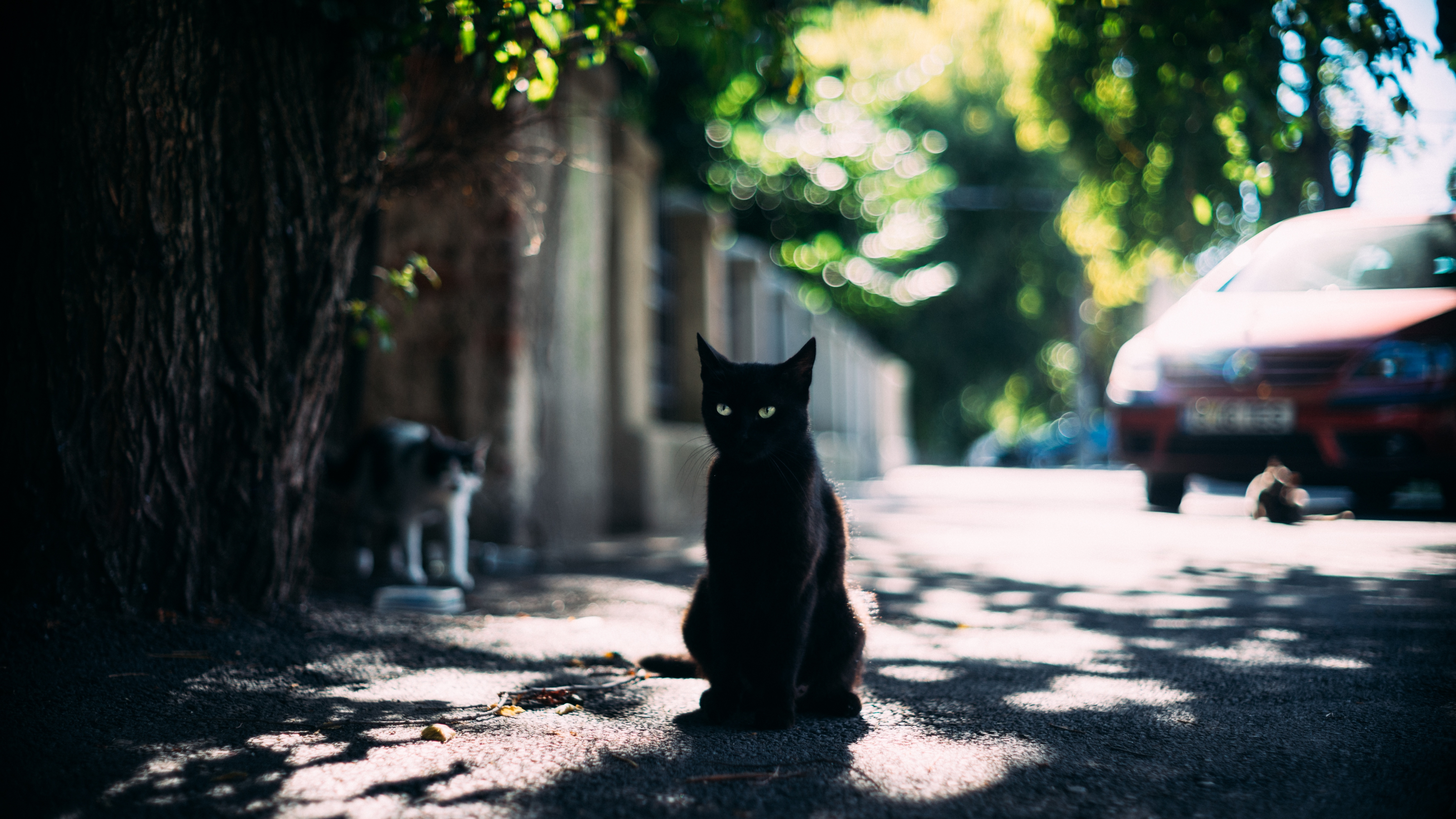 5120x2880 Black Cat Candid Portrait 5k Wallpaper Hd Animals 4k Wallpapers Images Photos And Background