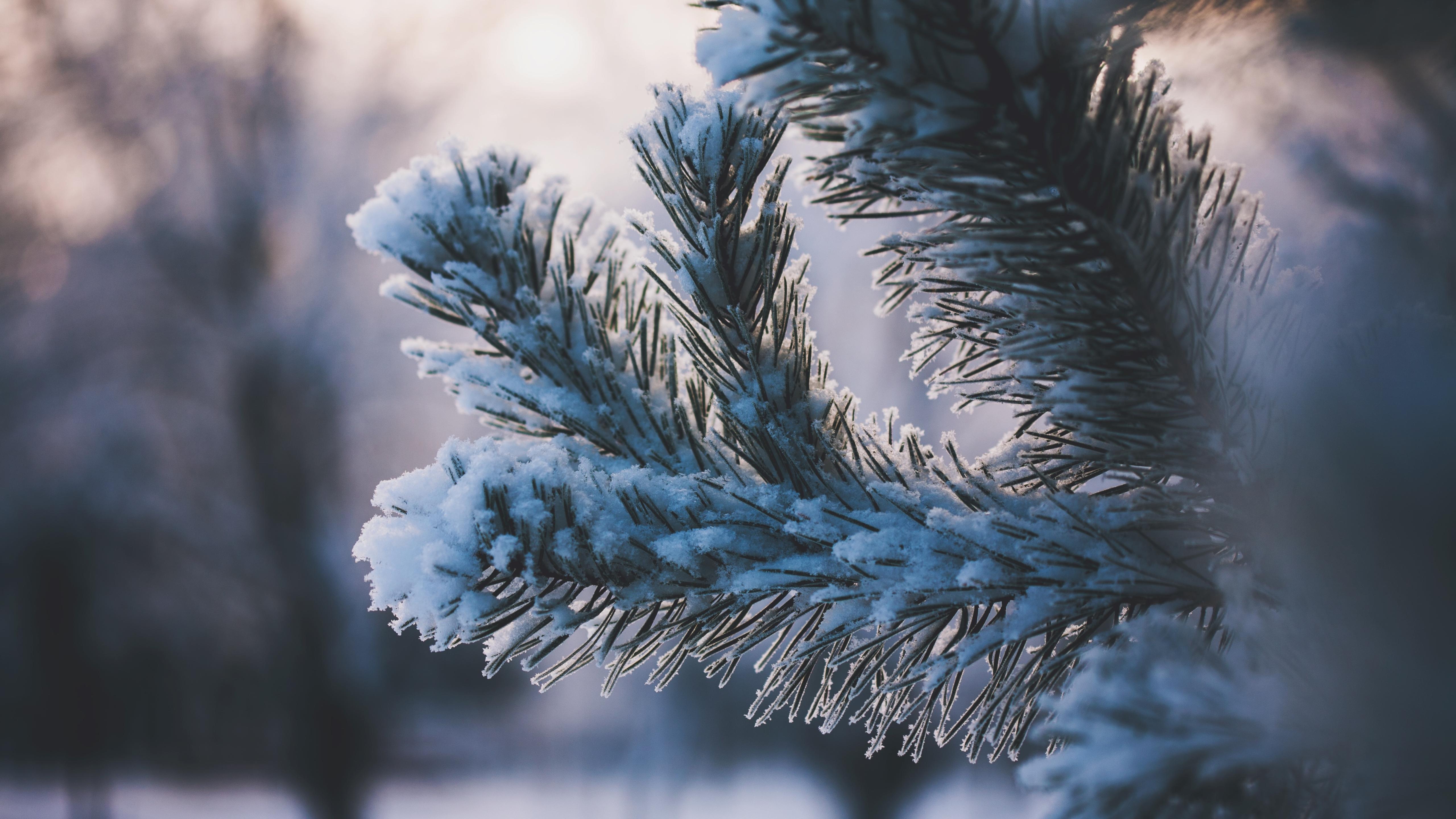 снег ветви лес snow branches forest  № 442833 загрузить