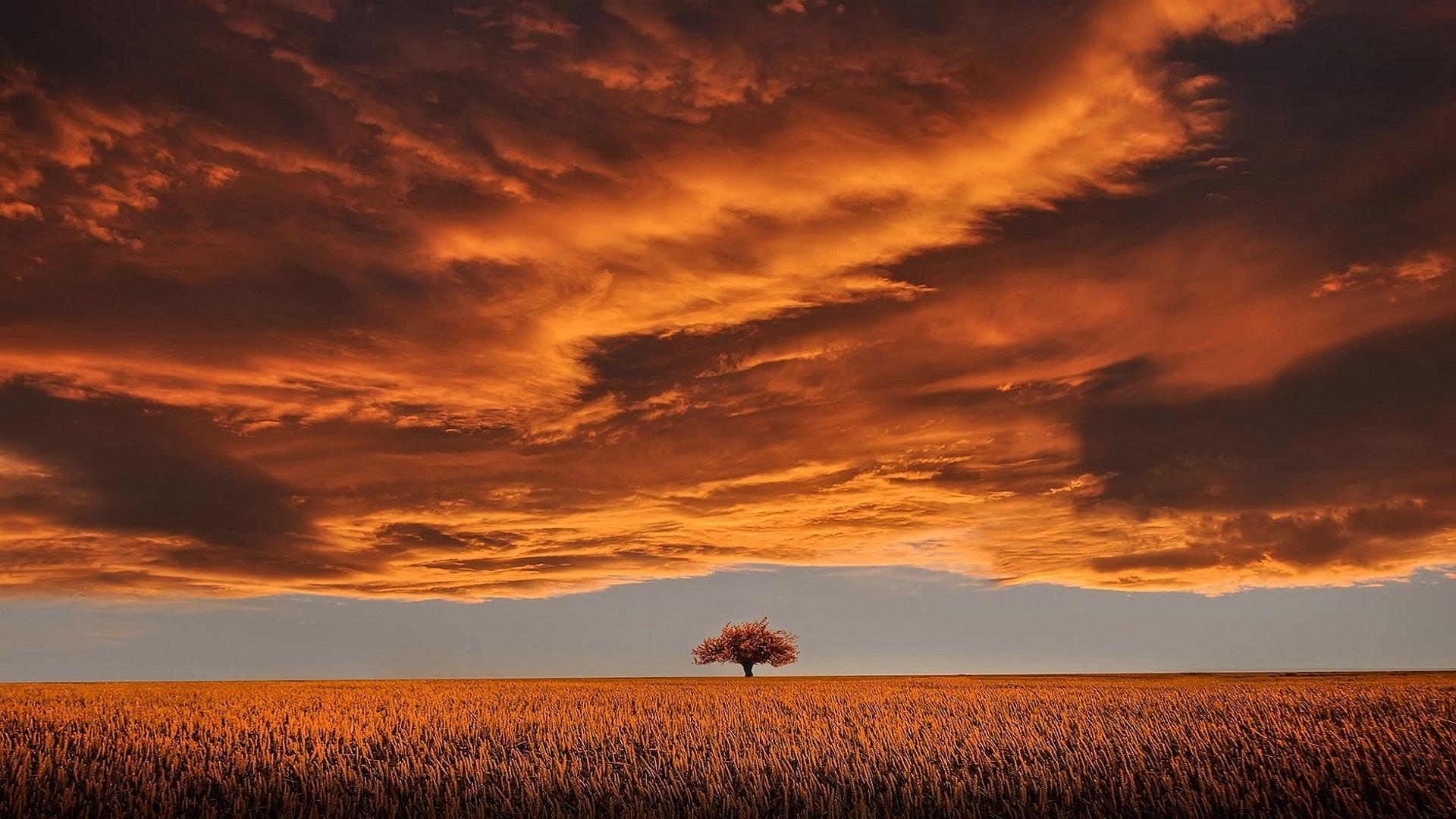Brown leafed tree on open field wallpaper hd nature 4k - Open field wallpaper ...