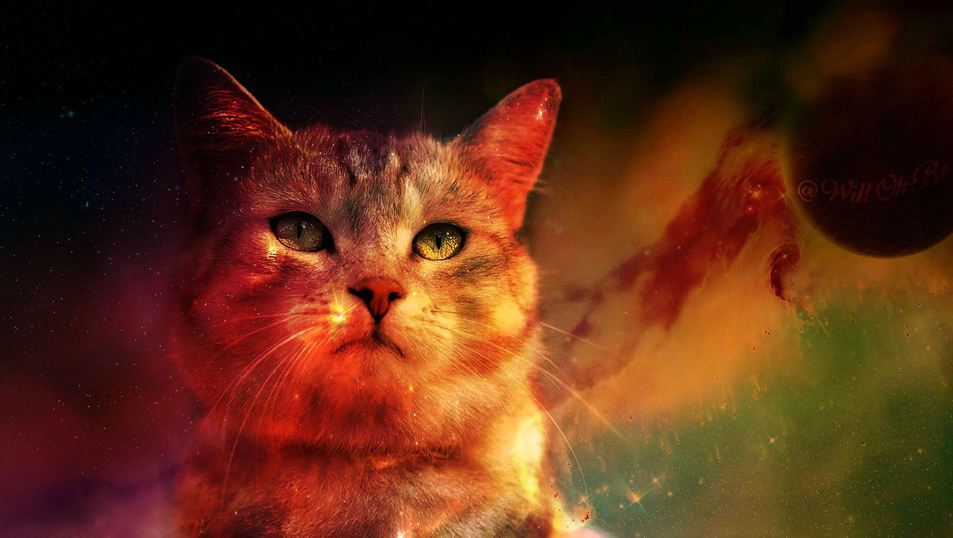 Cat In Space Digital Art Planet Wallpaper, HD Animals 4K ...