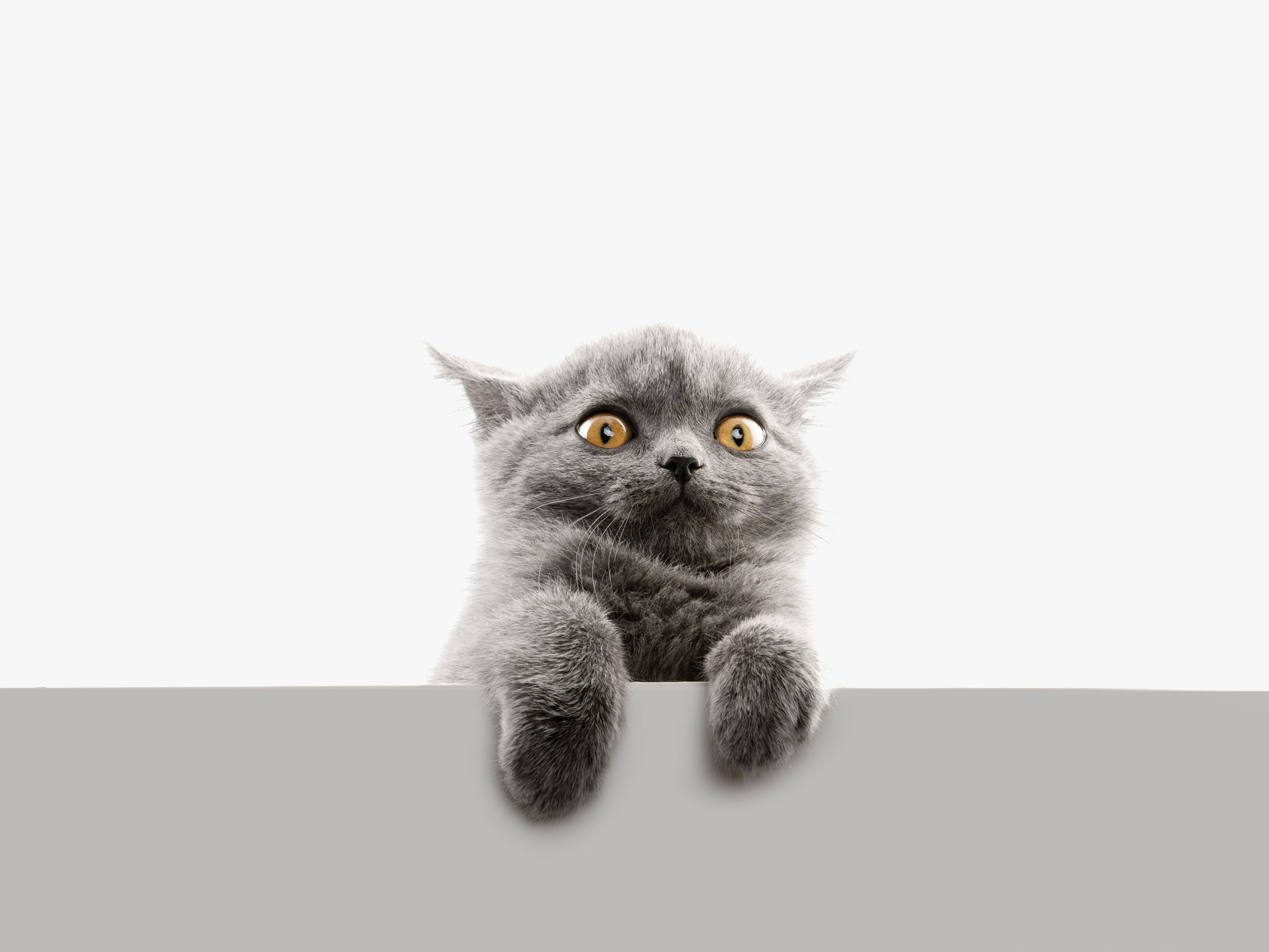 Кот взгляд испуганный  № 650702 бесплатно