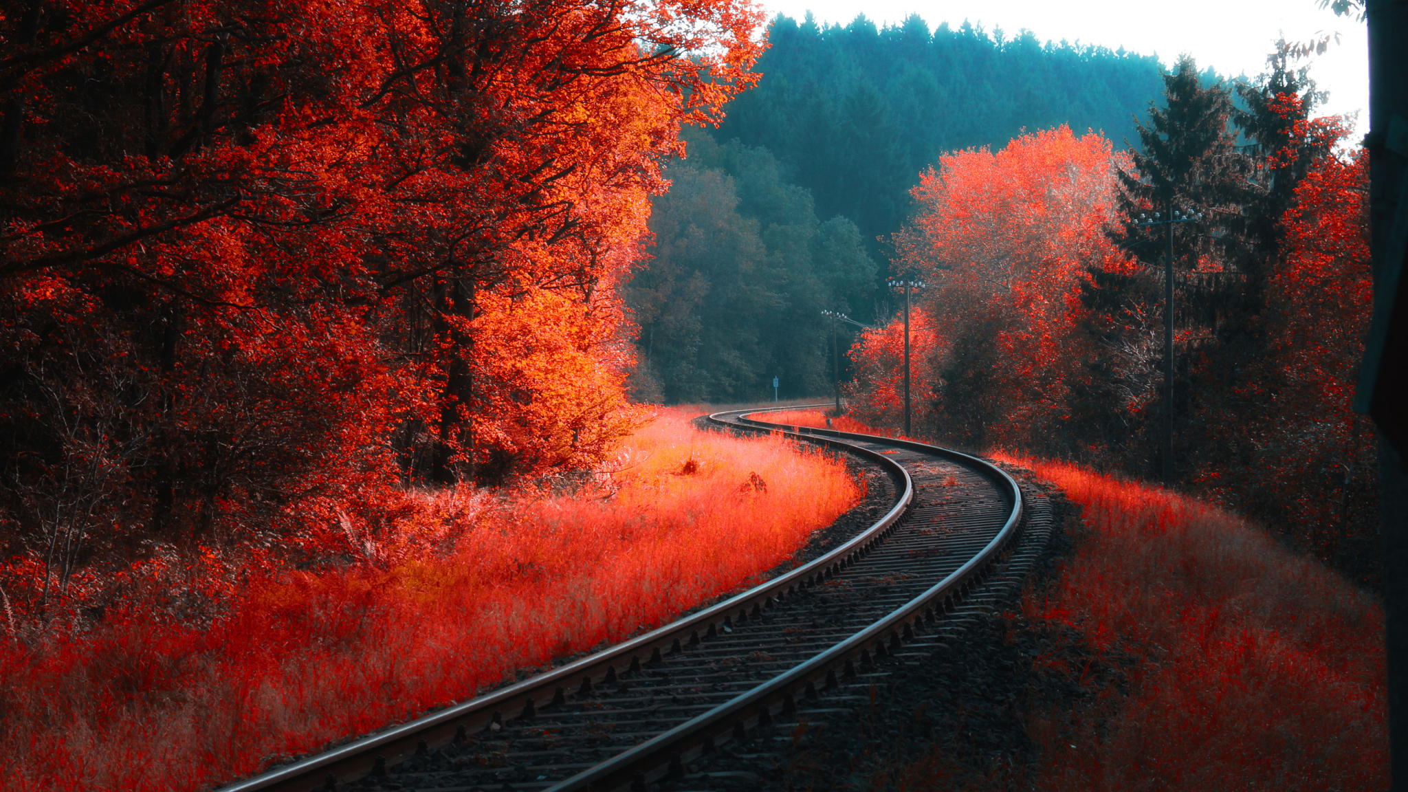 Colorful Landscape Forest Fall, Full HD 2K Wallpaper