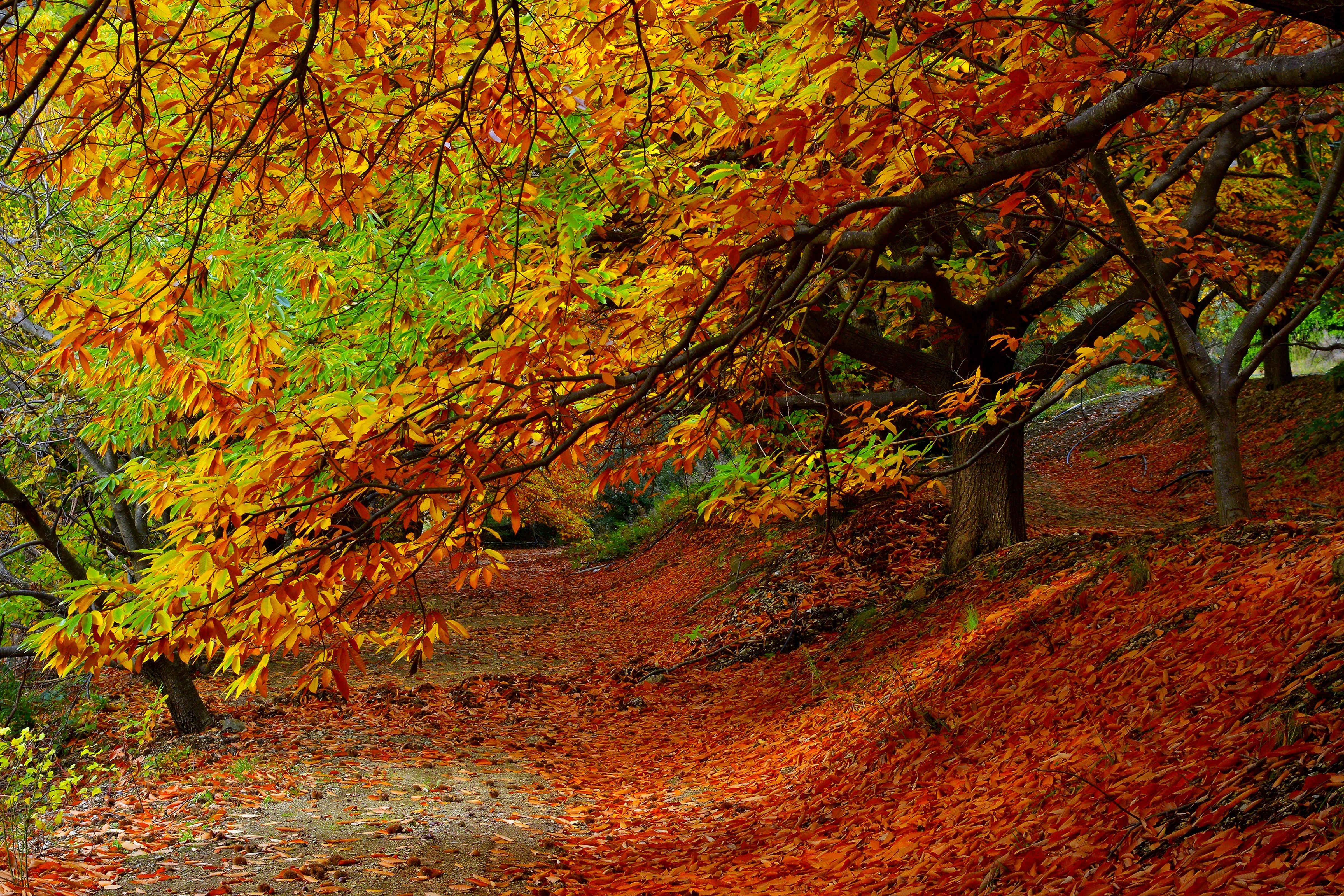 природа деревья листья осень nature trees leaves autumn  № 1036944  скачать