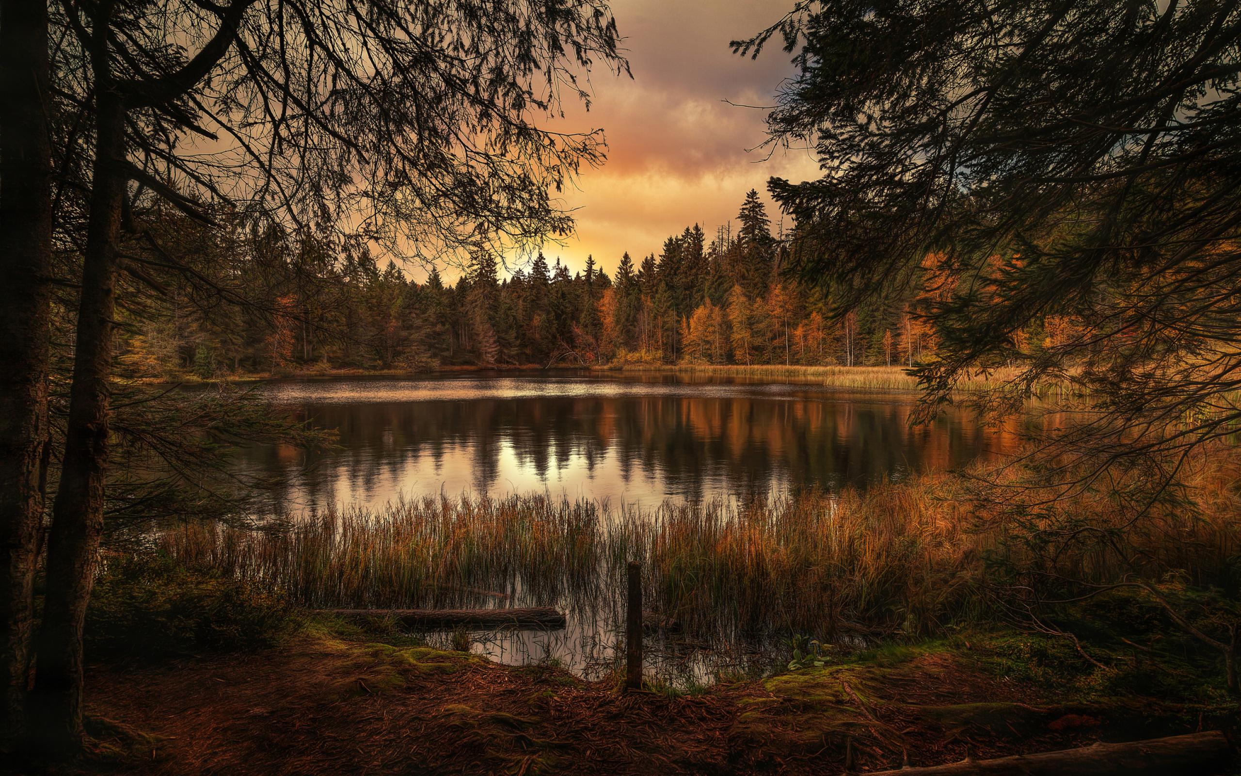 озеро в лесу на закате  № 380224 загрузить