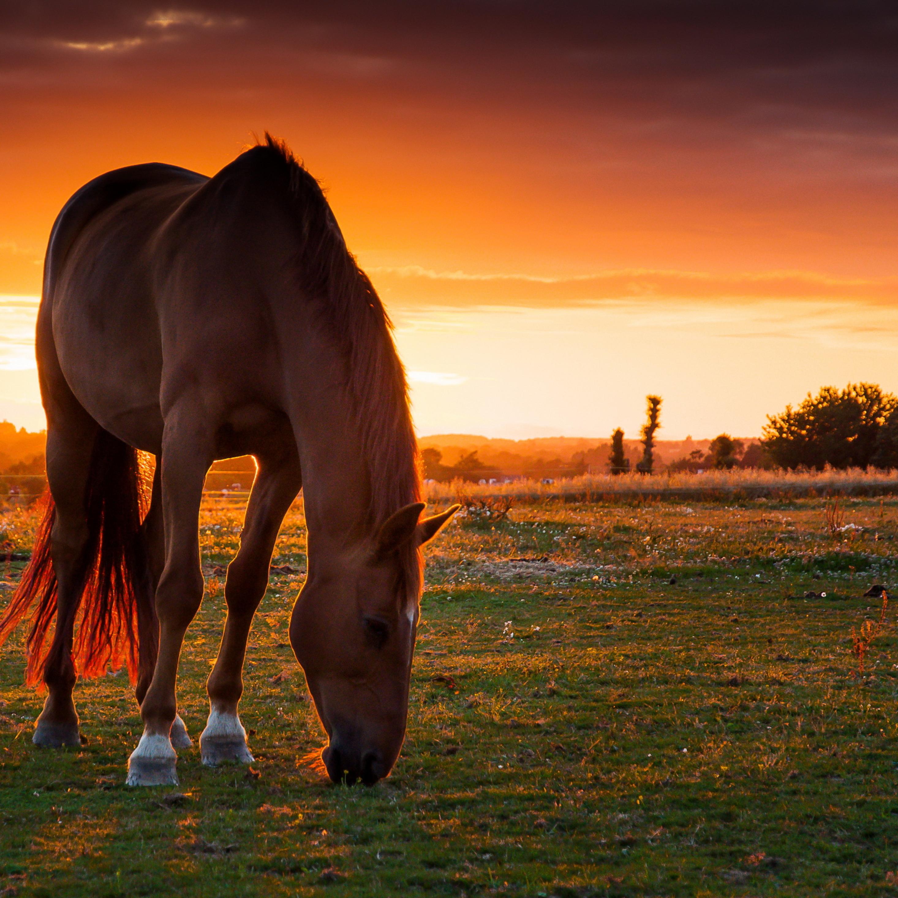 Лёжа на лошади без смс