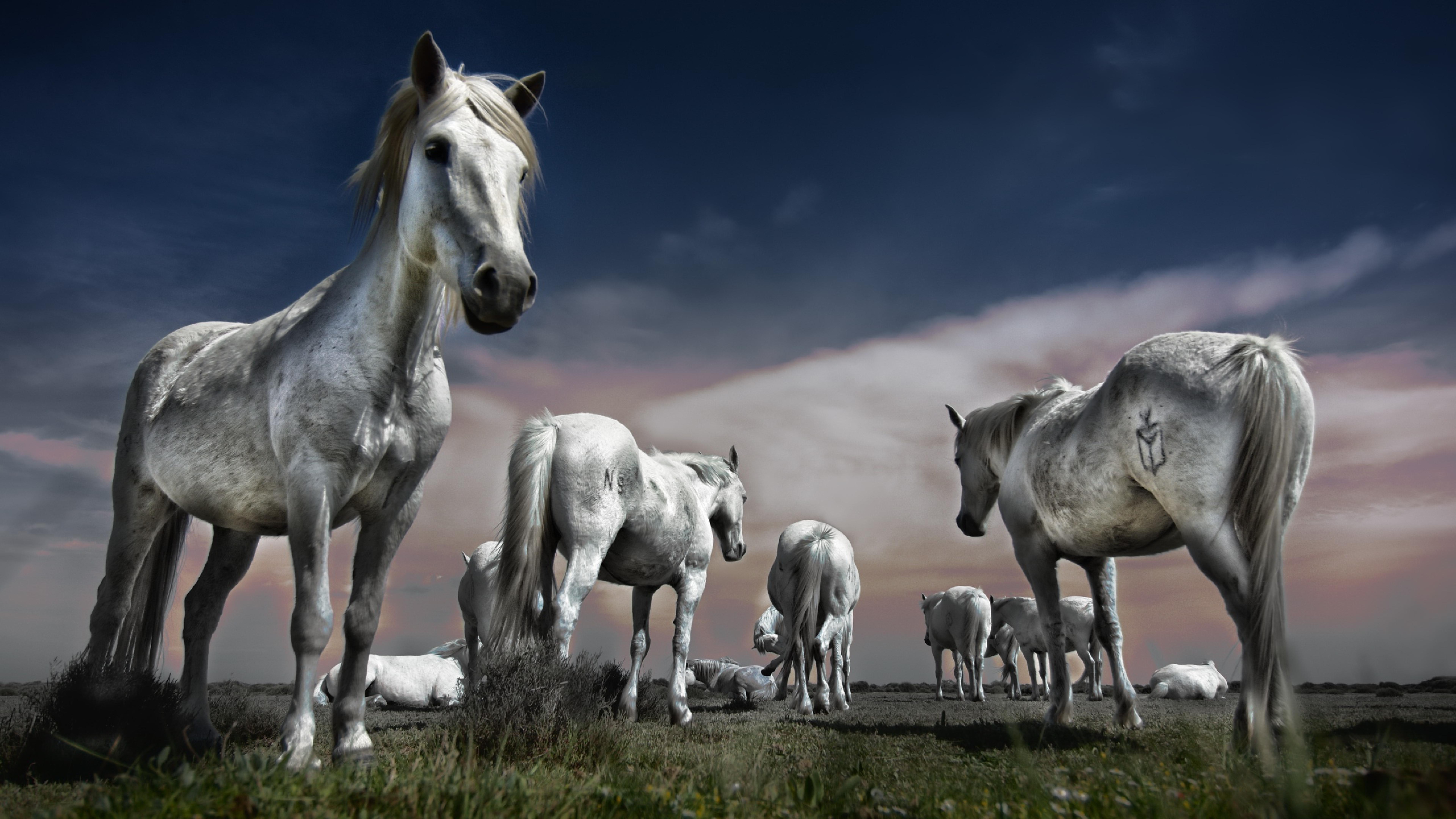 7680x4320 horse group 8k wallpaper hd animals 4k - 8k animal wallpaper ...