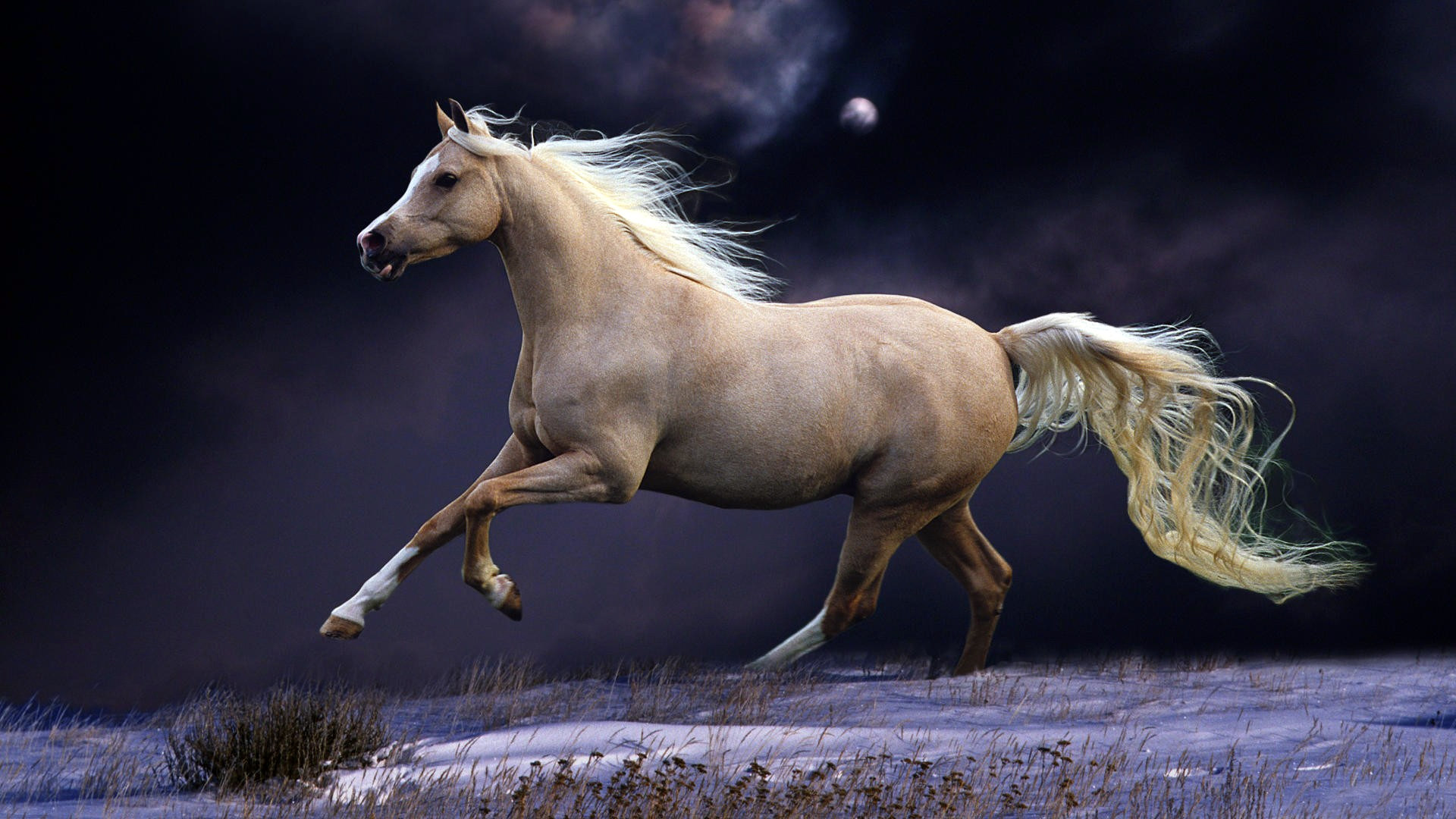 2560x1440 Horse Mane Running 1440p Resolution Wallpaper Hd Animals 4k Wallpapers Images Photos And Background Wallpapers Den