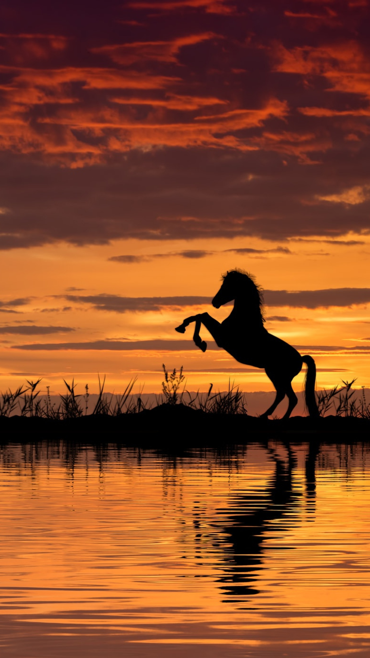 download horse reflection and sunset 1440x2560 resolution
