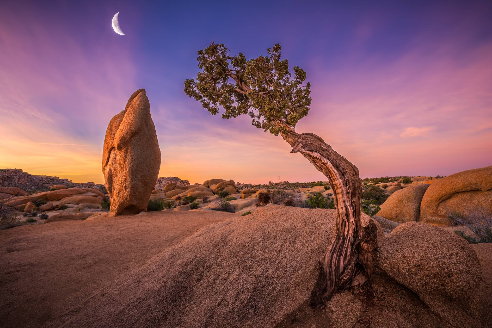 Joshua Tree National Park Wallpaper Hd Nature 4k Wallpapers Images Photos And Background