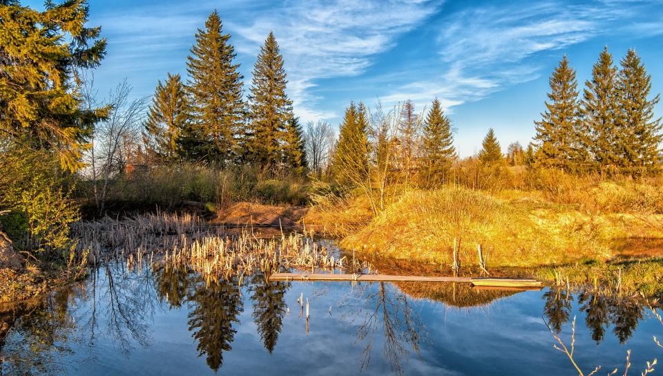 осенний лес у озера  № 254913 без смс