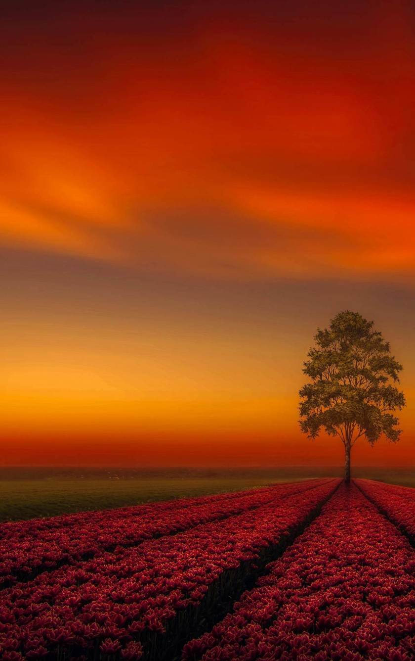 Download Lonely Tree Orange Sky 320x240 Resolution, HD 4K
