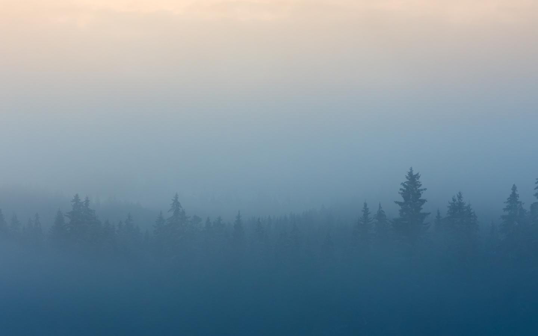 Misty Deer 4k Hd Desktop Wallpaper For 4k Ultra Hd Tv: Download Misty Foggy Forest 7680x4320 Resolution, HD 4K