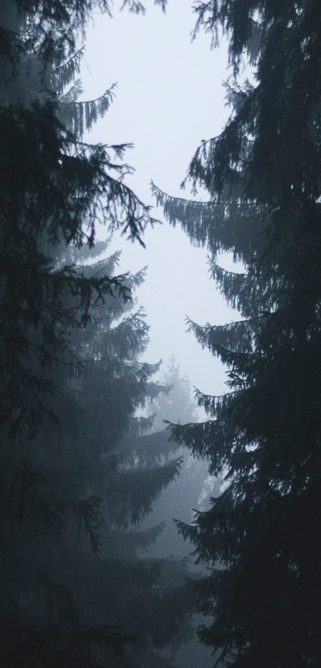 1080x2248 Misty Forest Photography 2021 1080x2248 Resolution Wallpaper Hd Nature 4k Wallpapers Images Photos And Background Wallpapers Den