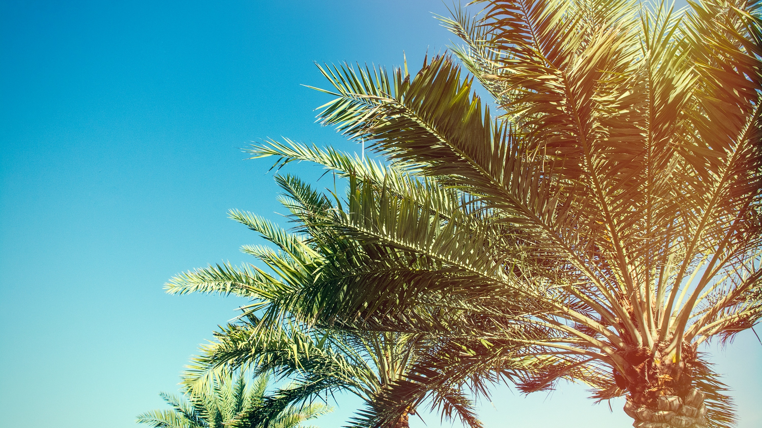 2560x1440 palm, trees, branches 1440P