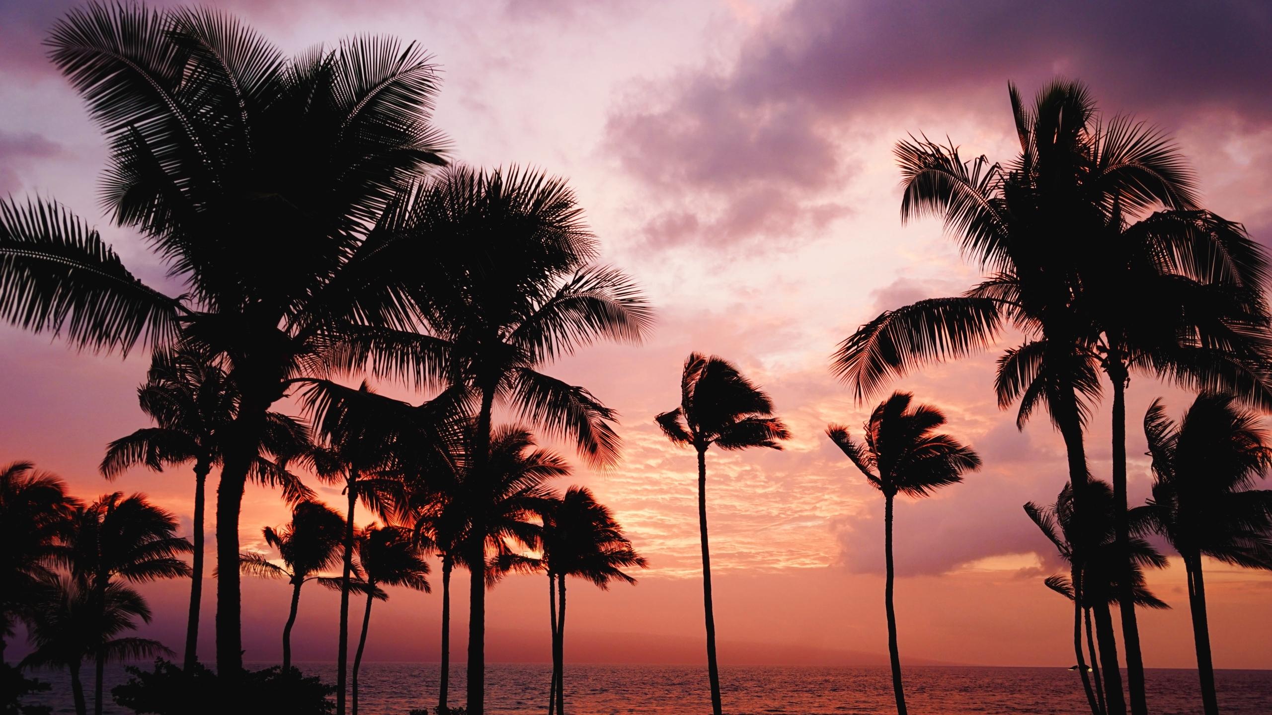 2560x1440 palm trees, sunset, sea 1440P