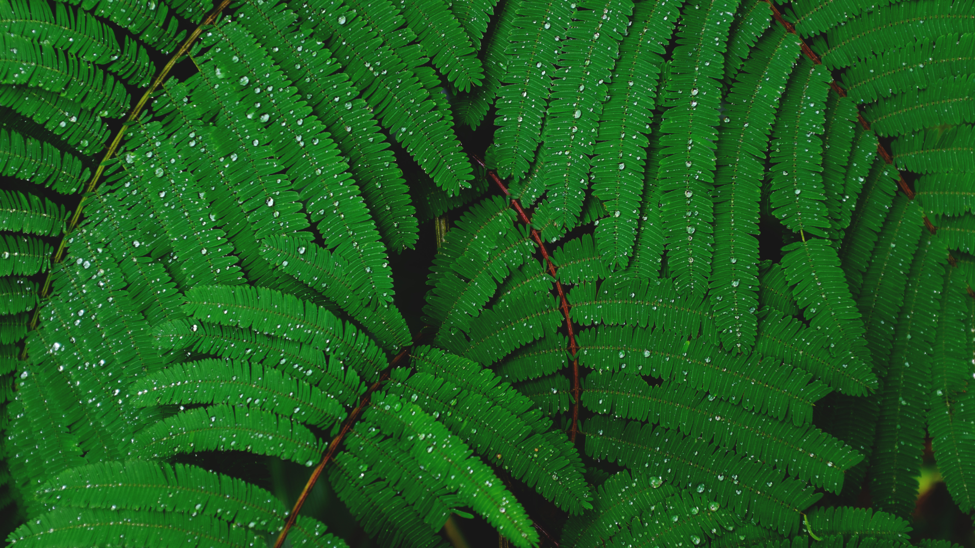 1920x1080 Plant Drops Leaves 1080p Laptop Full Hd Wallpaper Hd Nature 4k Wallpapers Images Photos And Background