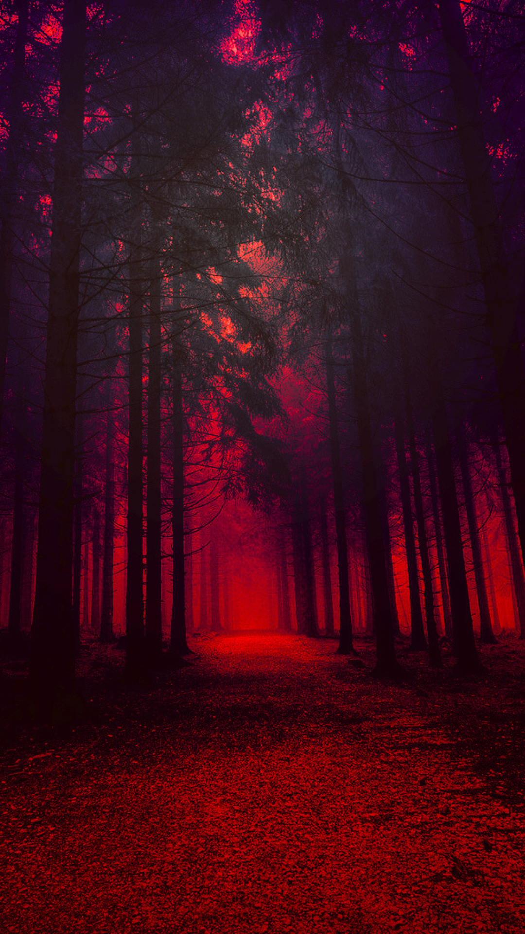 Red Forest Full Hd Wallpaper