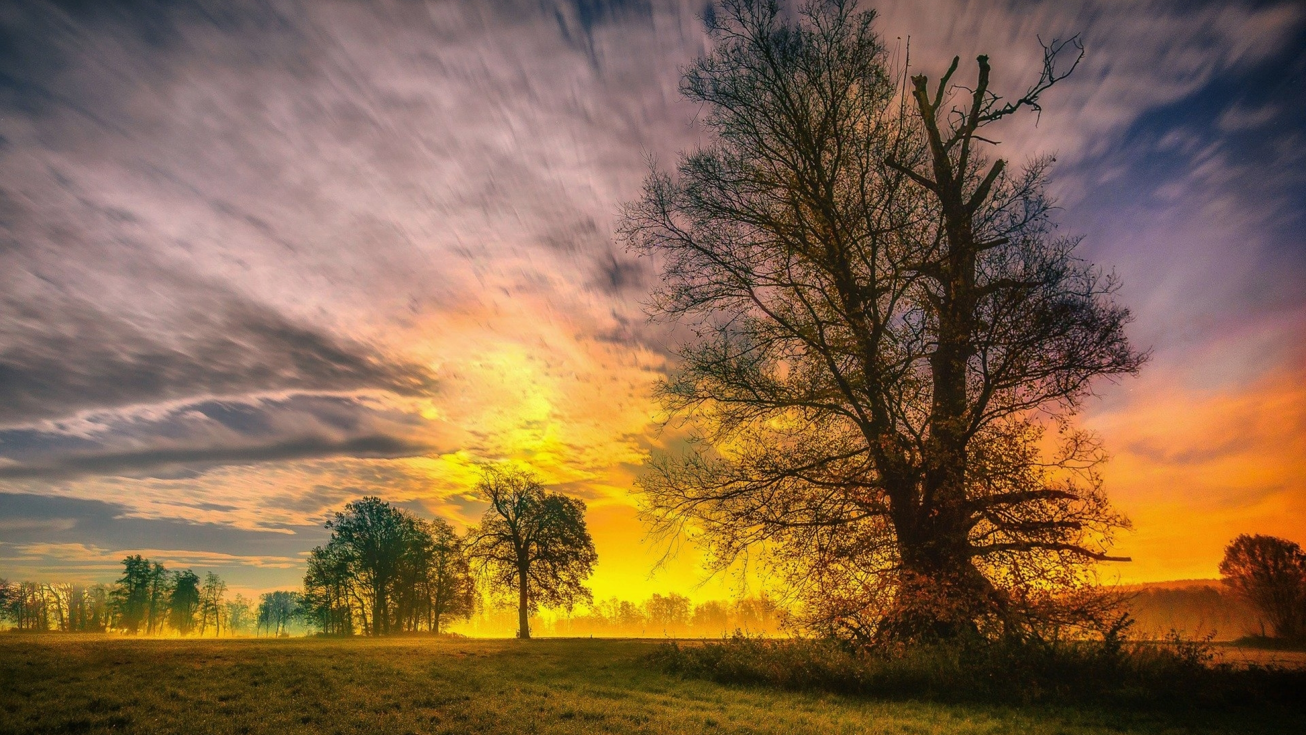 2560x1440 Spring Trees And Sunset 1440p Resolution Wallpaper Hd Nature 4k Wallpapers Images Photos And Background Wallpapers Den