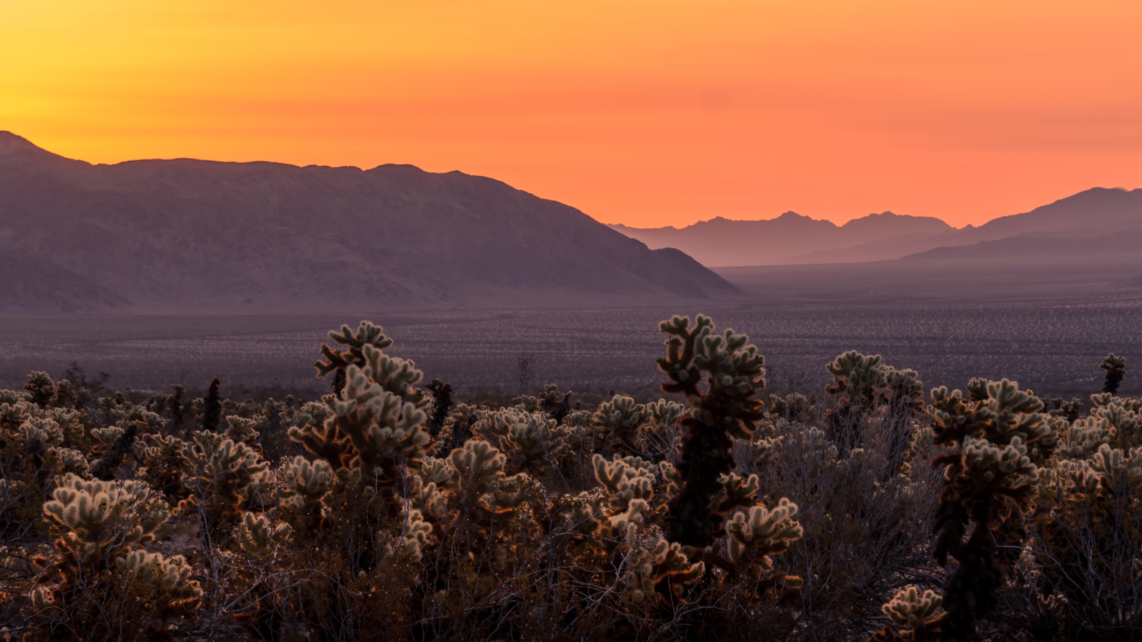 Sunrise In Joshua Tree National Park Wallpaper Hd Nature 4k Wallpapers Images Photos And Background