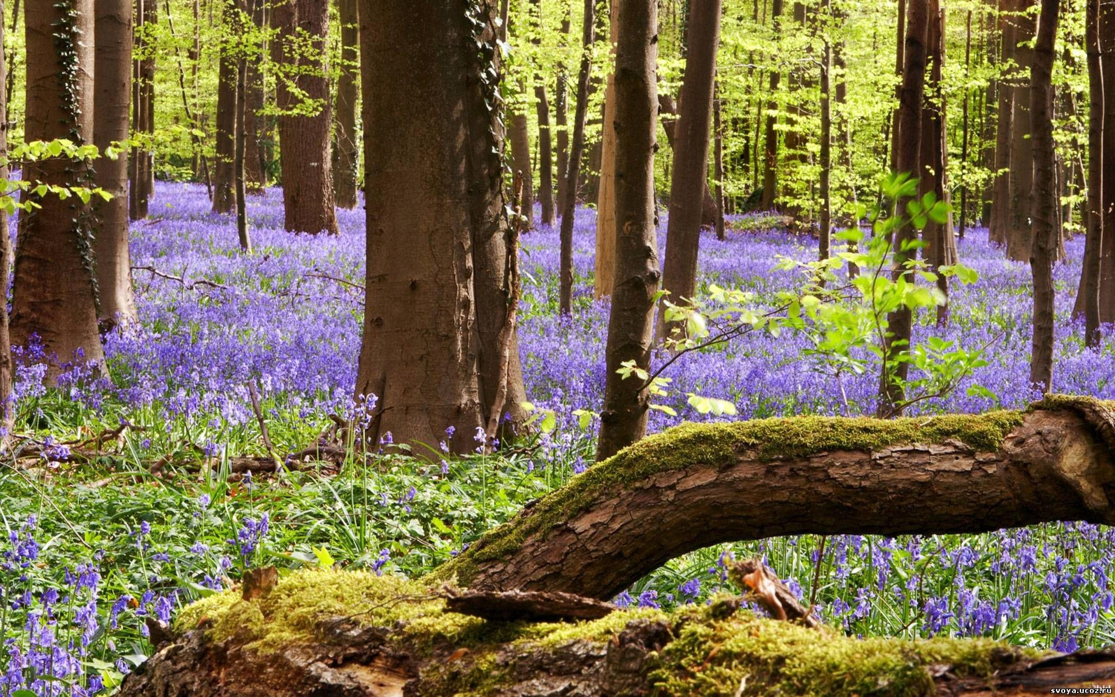 весной в лесу  № 113913 бесплатно