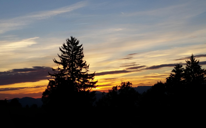 2880x1800 trees, sky, sunrise Macbook Pro Retina Wallpaper ...