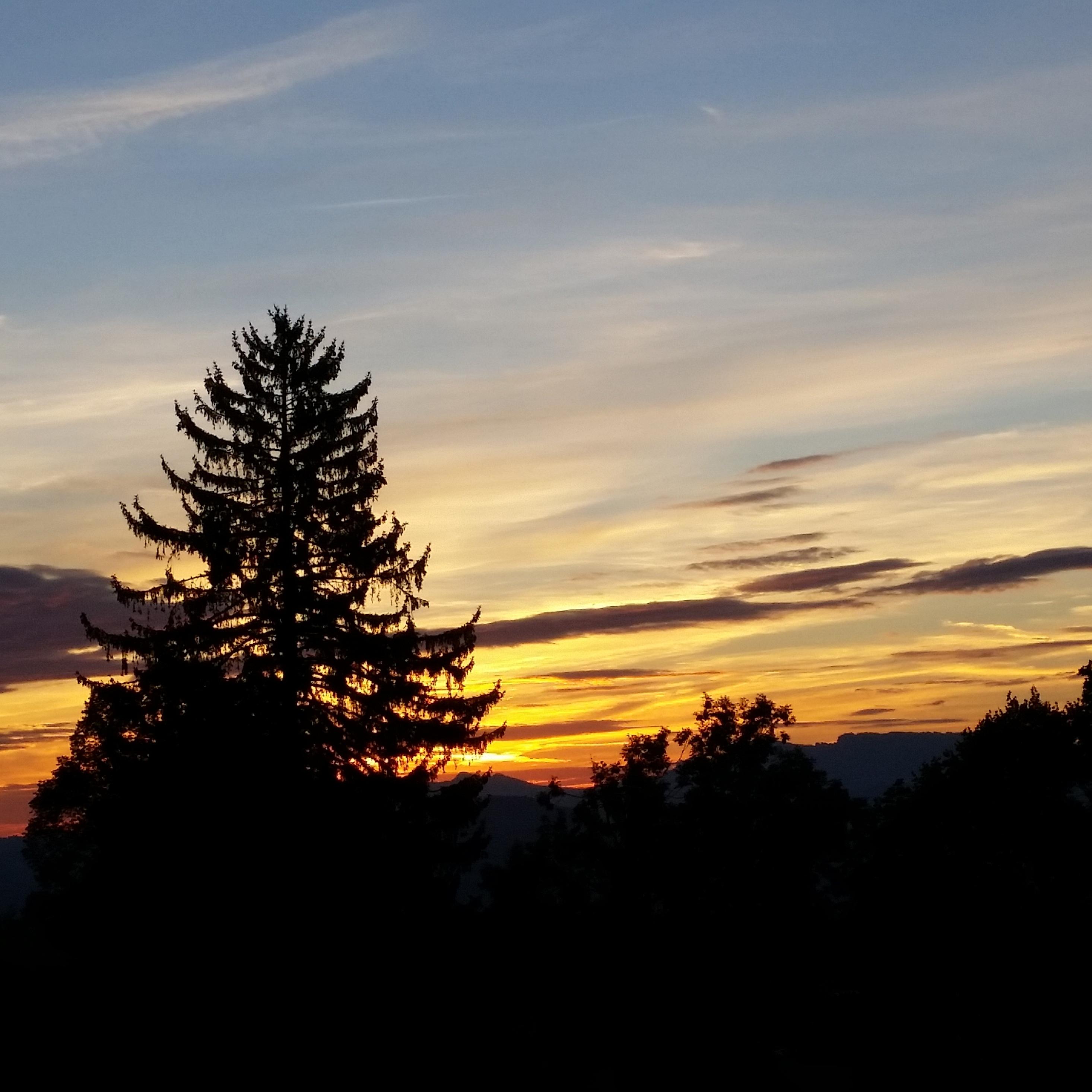2932x2932 trees, sky, sunrise Ipad Pro Retina Display ...