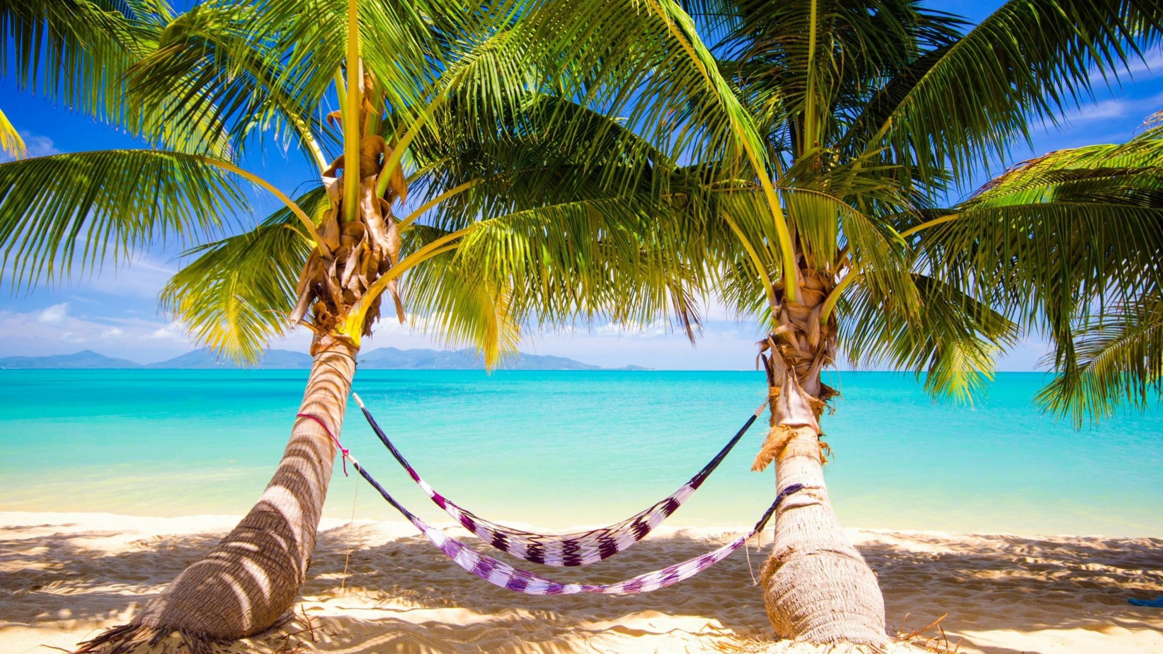 Море песок пляж пальмы  № 3898023 без смс