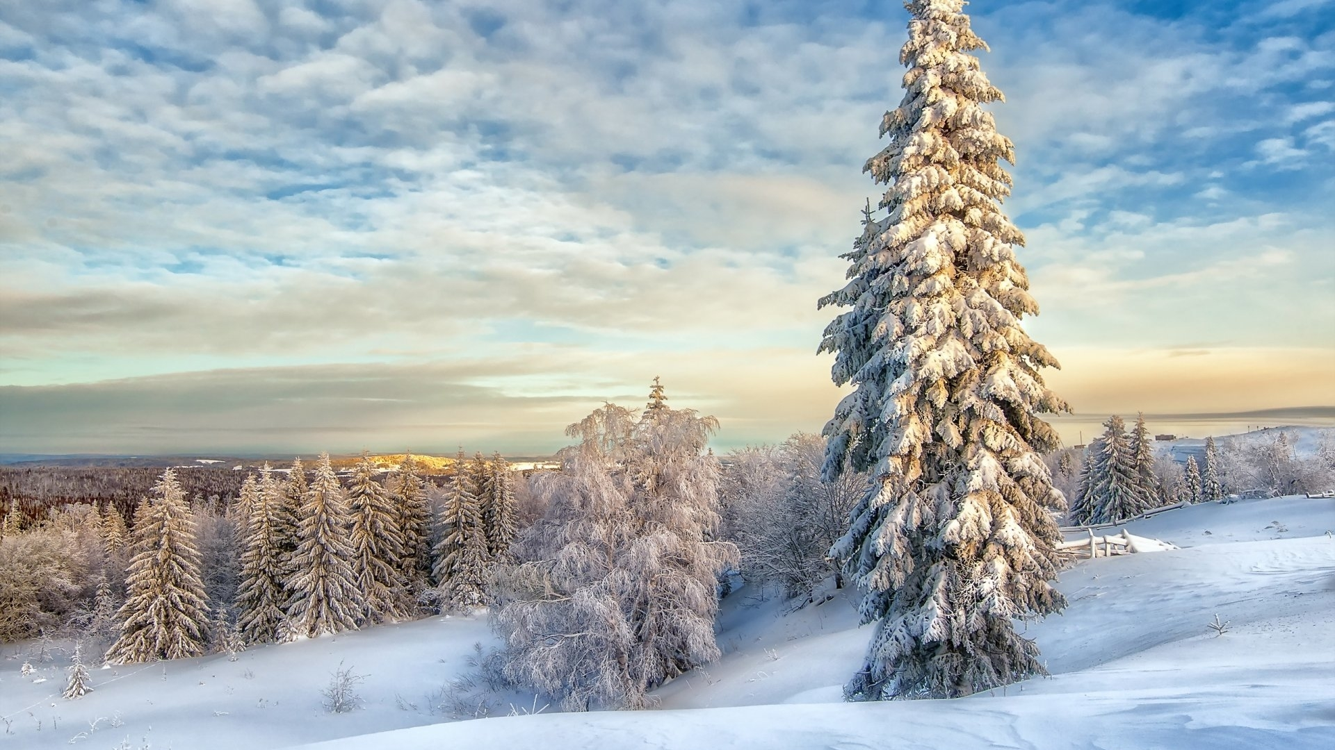 1920x1080 Winter Landscape With Snow Covered Trees 1080p Laptop Full Hd Wallpaper Hd Nature 4k Wallpapers Images Photos And Background