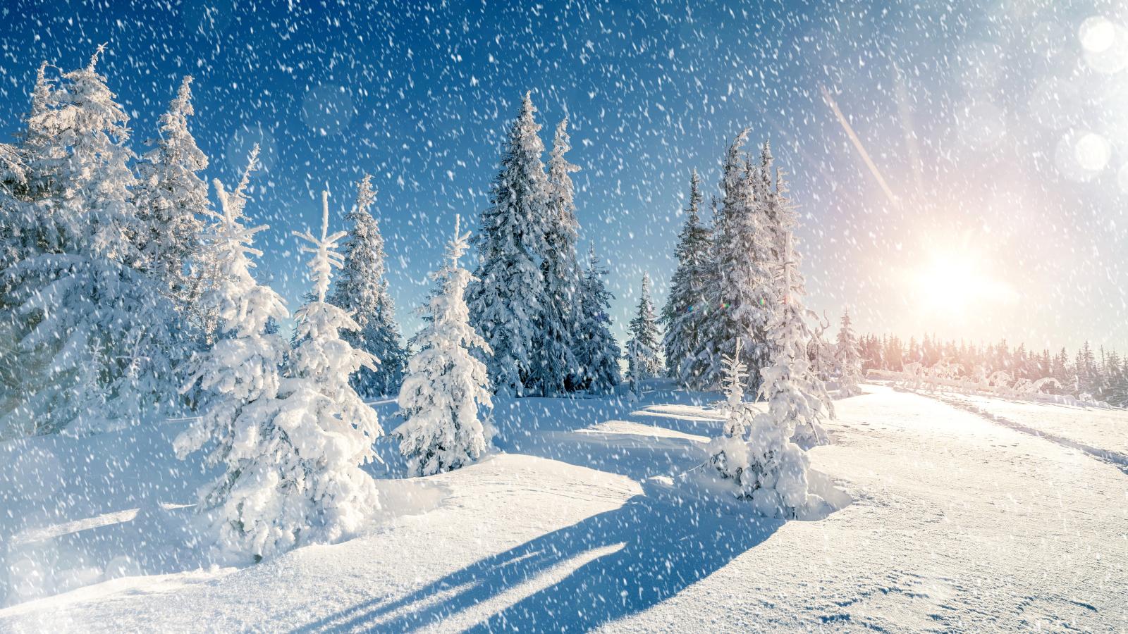 winter trees snow season hd 4k wallpaper