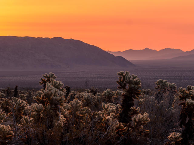 Sunrise in joshua tree national park wallpaper hd nature 4k wallpapers images photos and - Joshua tree wallpaper ...