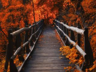 A Bridge in Autumn Season wallpaper