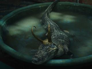 Alligator Loki wallpaper