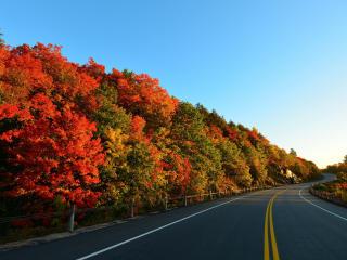 autumn, road, turn wallpaper