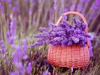 Basket Of Lavender Purple Flower wallpaper