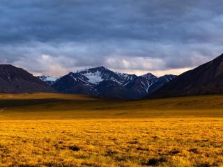 Beautiful Yellow Grass Field With Sunrays Landscape View wallpaper