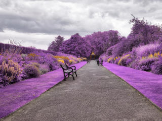 Belfast Botanic Gardens in Northern Ireland wallpaper