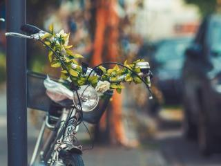 bicycle, flowers, headlight wallpaper