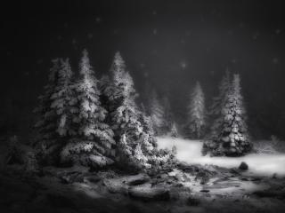 Black & White Snow Winter Night wallpaper