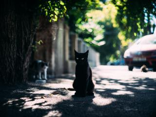 HD Wallpaper | Background Image Black Cat Candid Portrait
