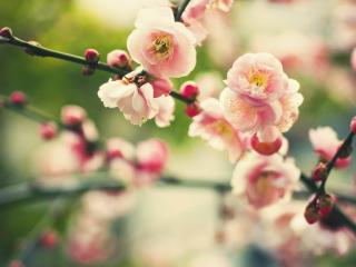 bloom, branch, flowers wallpaper