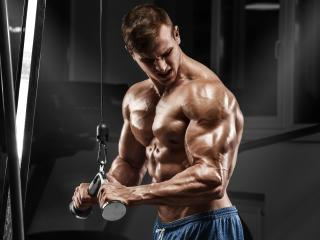 Bodybuilder Muscles wallpaper