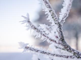 branch, hoarfrost, frost wallpaper