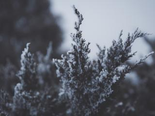 branch, snow, hoarfrost wallpaper