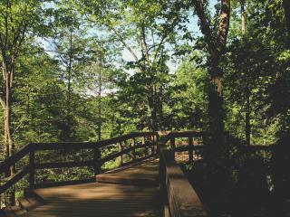 bridge, trees, foliage wallpaper