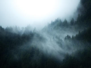 British Columbia Foggy Forest wallpaper