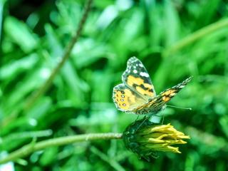 butterfly, flower, blur wallpaper