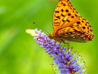 butterfly, grass, wings wallpaper
